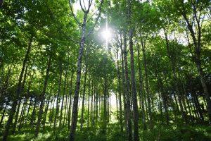 fachadas-vegetales-mecanismo-ahorro-energia