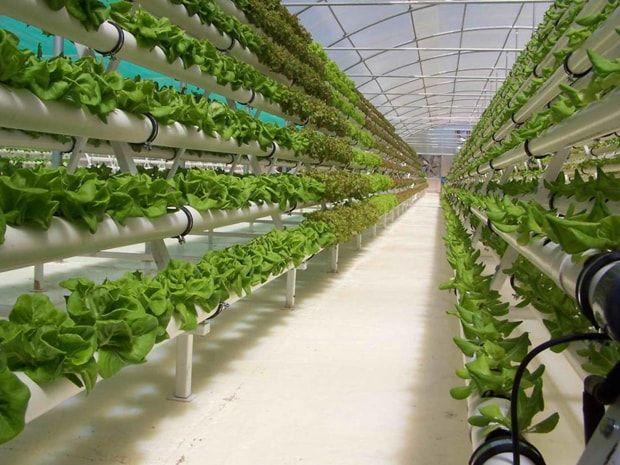 ideas-construir-jardines-hidroponicos-invernadero