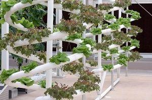 ideas-construccion-jardin-hidroponico
