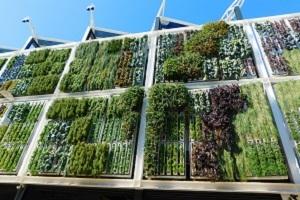 beneficios-jardin-vertical-fachadas