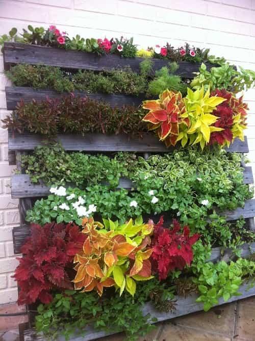 jardin-vertical-palets