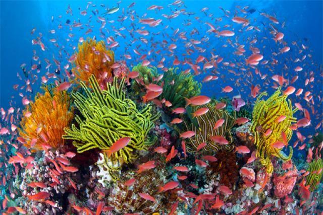 paisajes-increibles-mundo-coral-australia