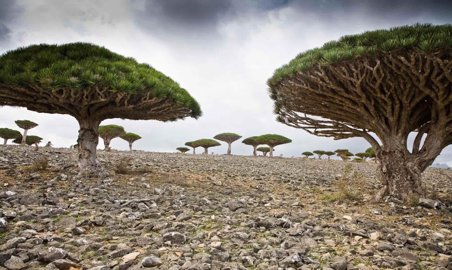 paisajes-socotra-yemen