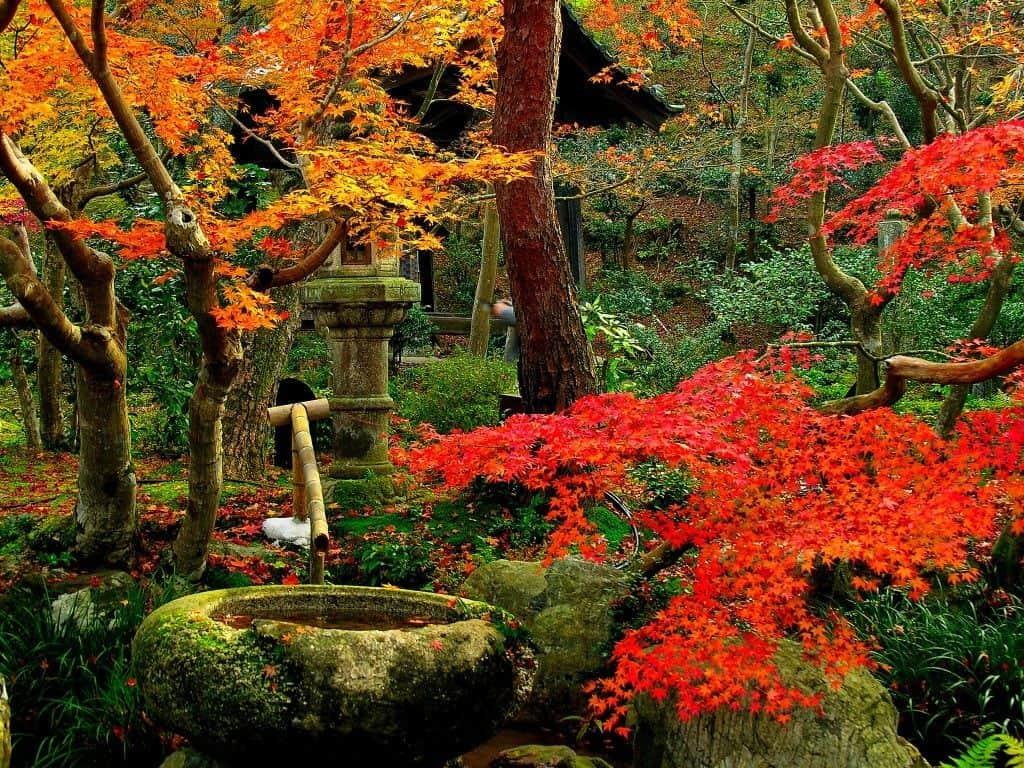 paisajes-increibles-mundo-saiho-jardin-japon
