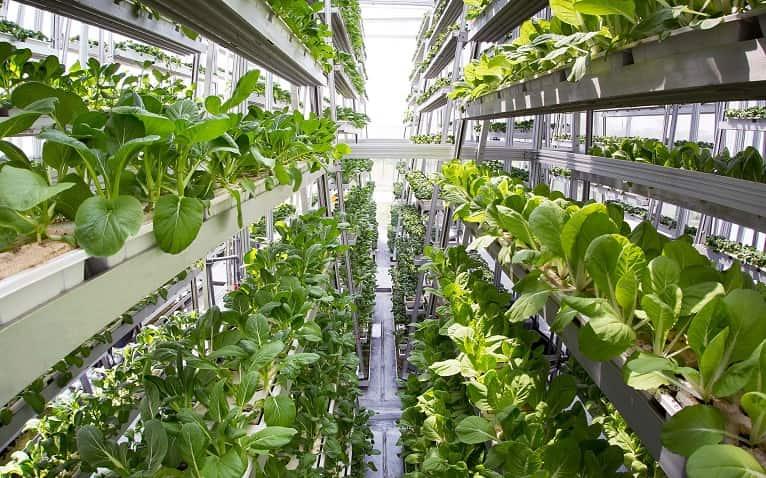 desarrollo-sostenible-huerto-vertical