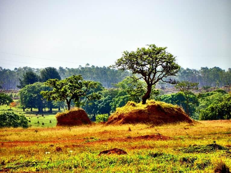 desarrollo-sostenible-medioambiental