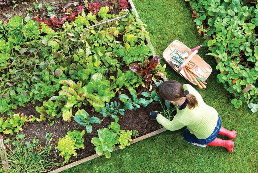 ideas-jardin-huerto-ecologico