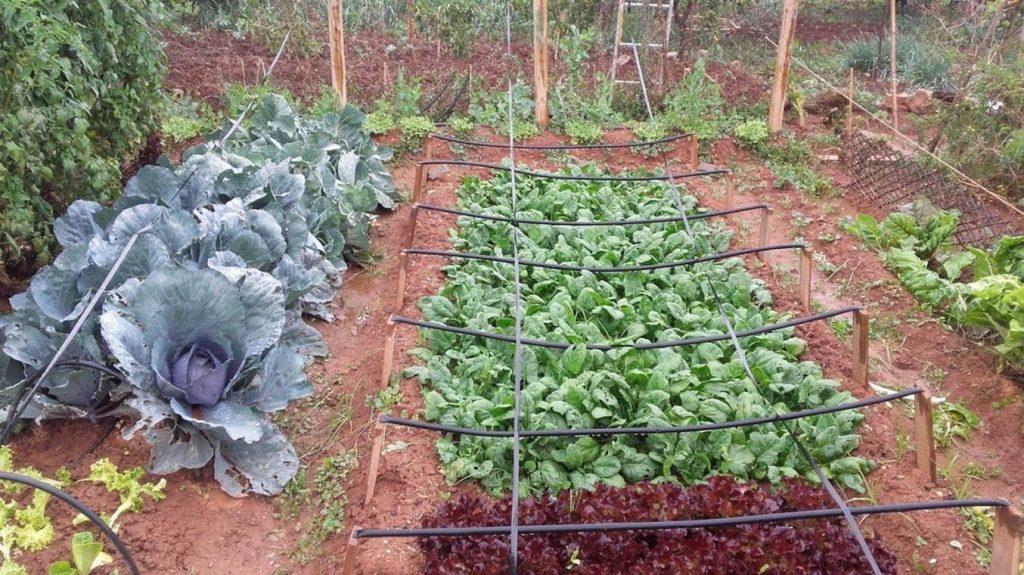 ideas-jardin-minihuerto