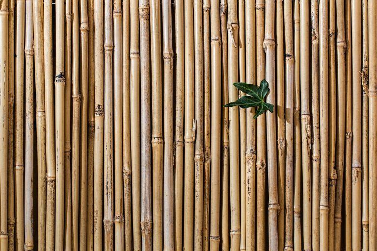 muro-bambu