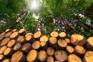 biomasa-energia-ayudas-pais-vasco