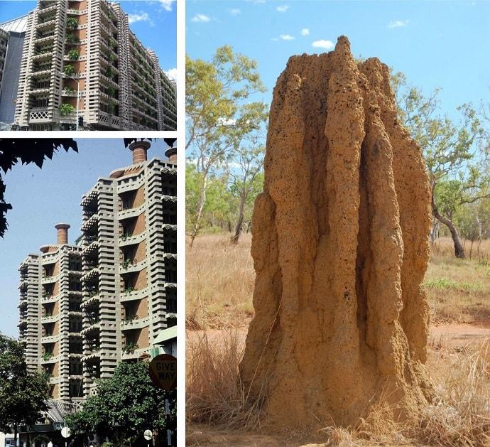 termitas-eficiencia-energetica-relacion