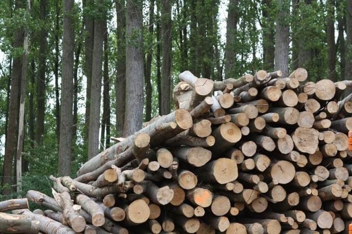 todo-sobre-biomasa-fuente-energia