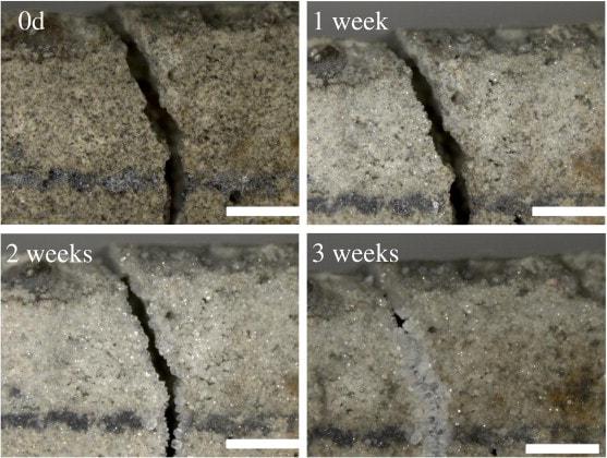 evolucion-tres-semanas-reparacion-cemento