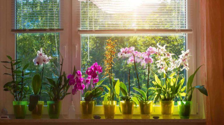 flores-naturales-casa
