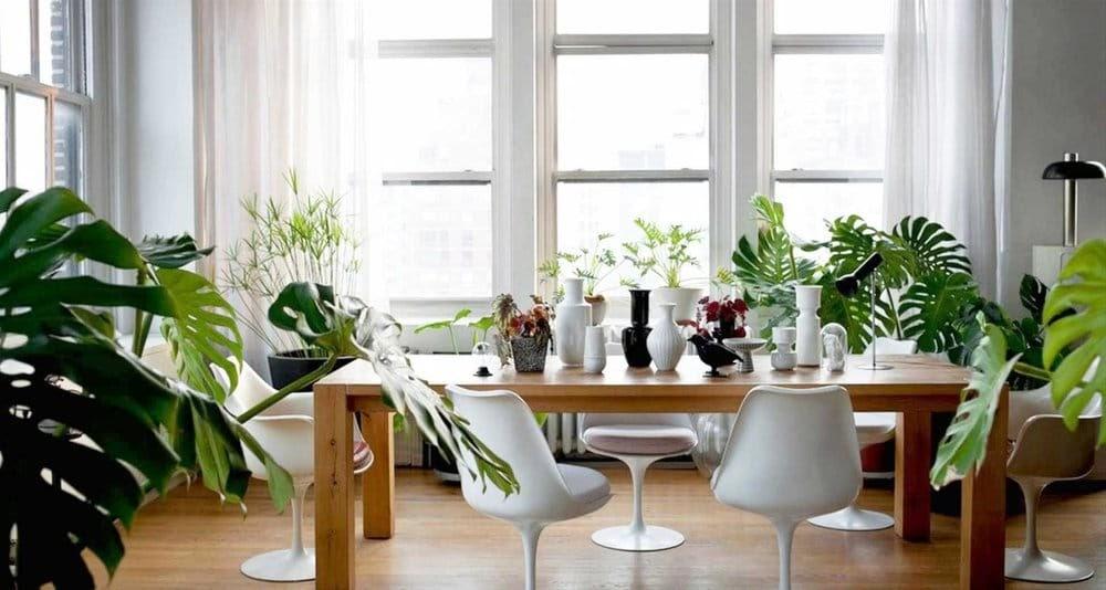 plantas-comedor